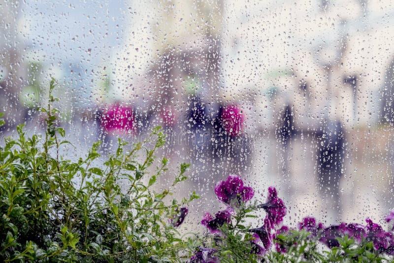 Regn tappar på vått fönster, och gatalilan blommar bakom, suddigt folk, ljus bokeh för stad Begrepp av regnigt väder royaltyfria bilder