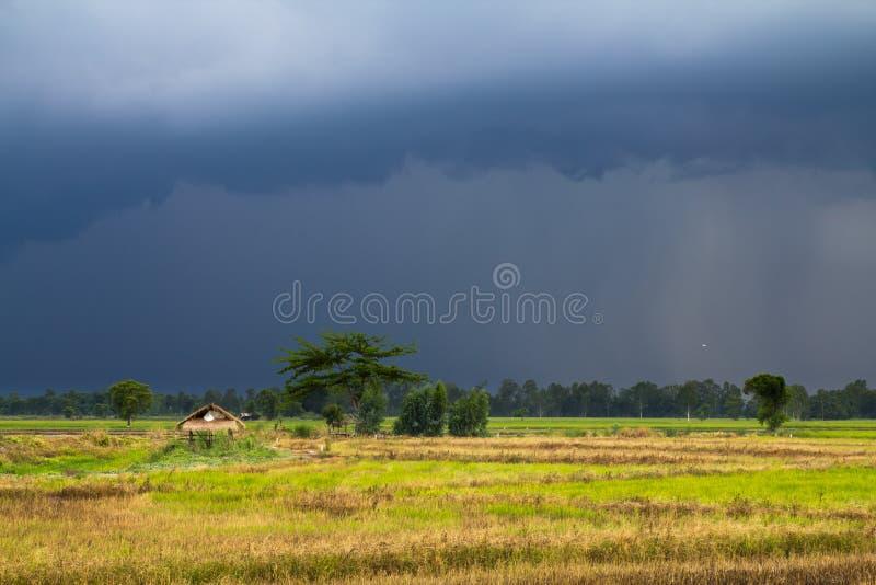 regna för paddy royaltyfri bild