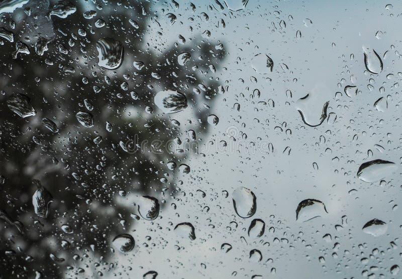 Regna tappar royaltyfri fotografi