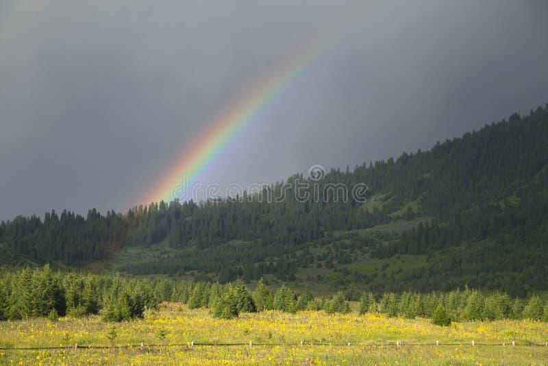 Regnbåge över skog royaltyfri bild