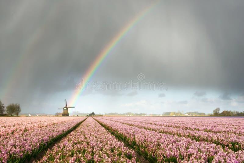Regnbåge över väderkvarn- och blommafält arkivfoton