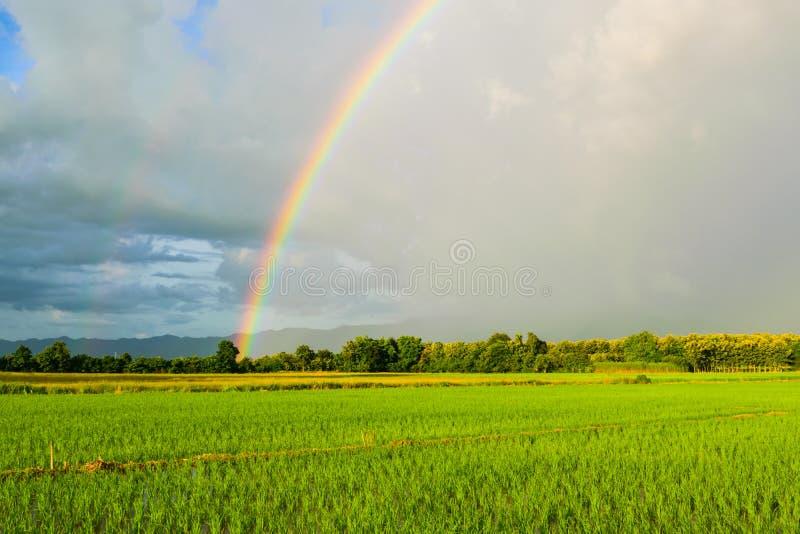 Regnbåge efter regnet för solnedgång i Thailand royaltyfri bild