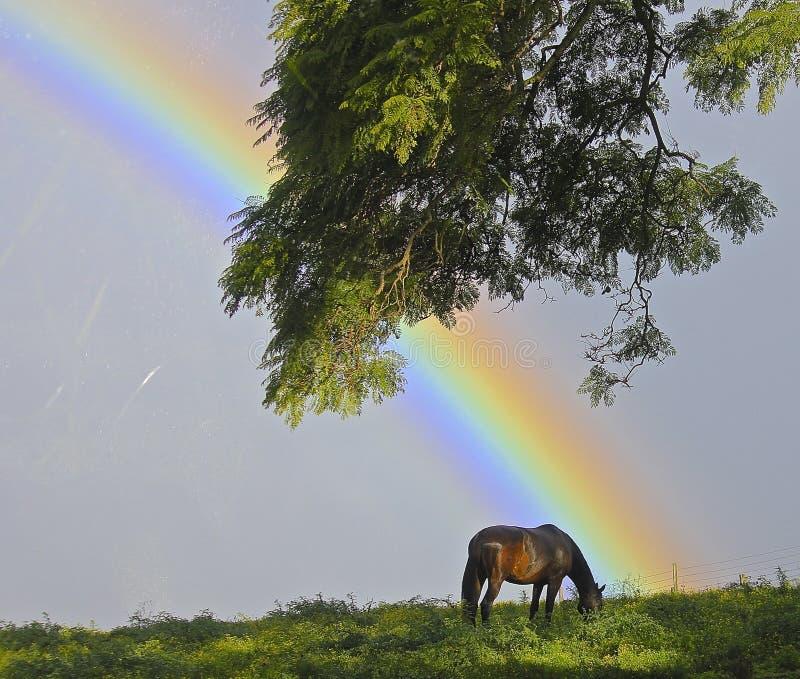 Regnbåge i beta arkivfoto