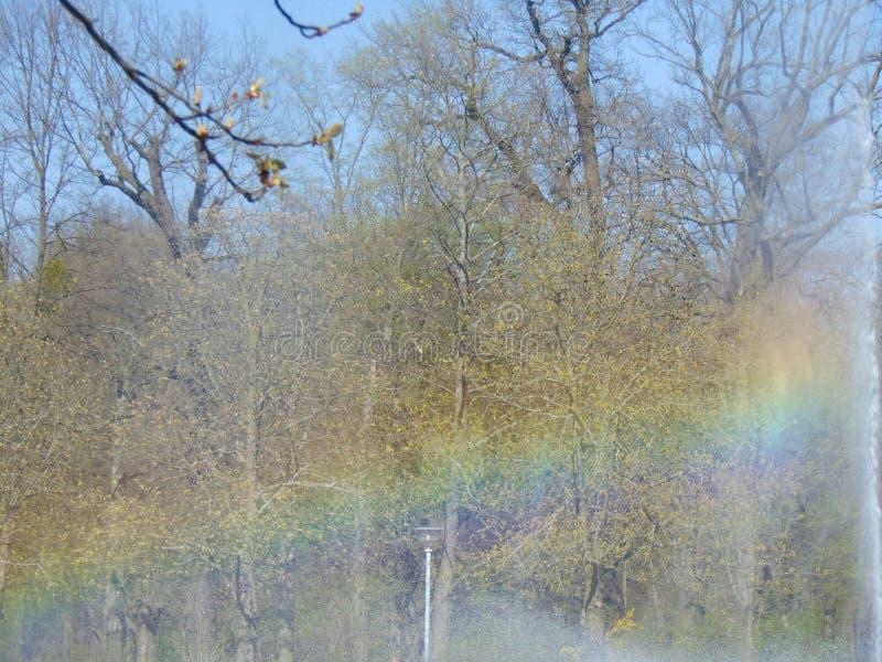 Regnbåge i en springbrunn royaltyfri fotografi