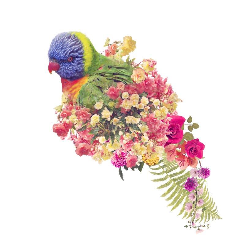 RegnbågeLorikeet papegoja med blommor Effekt f?r dubbel exponering royaltyfria foton