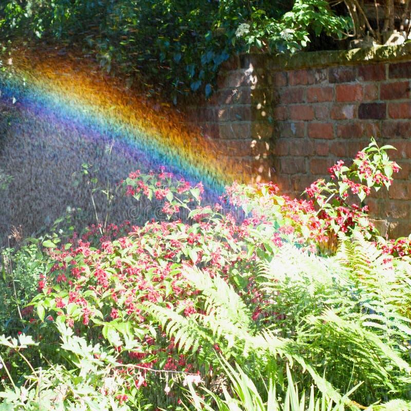 Regnbågeträdgård arkivbild
