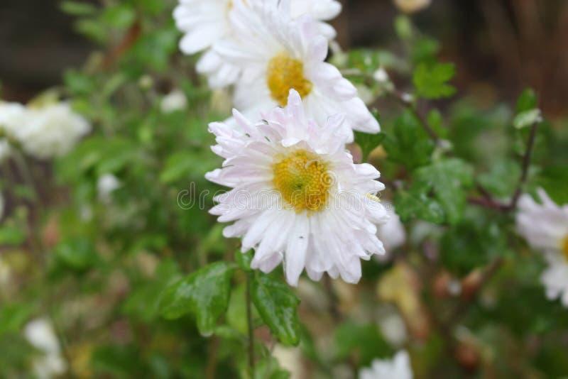 Regndroppar fryste på blommorna royaltyfri bild