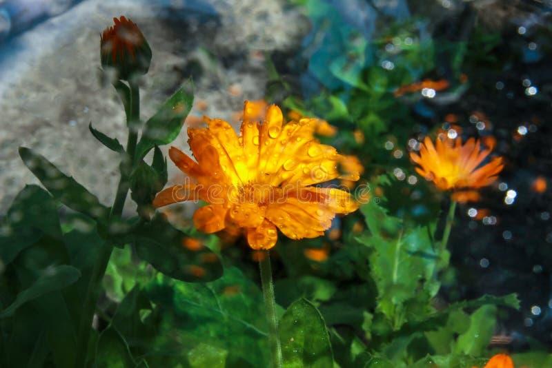 Regndroppar på exponeringsglas med en reflexion av färger royaltyfri bild