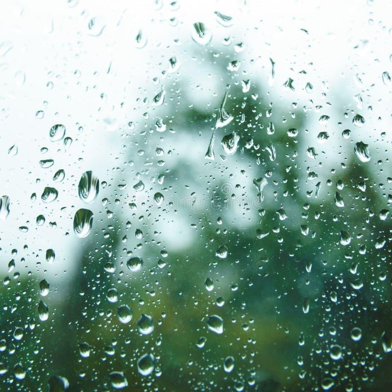 Regndroppar på fönsterexponeringsglas i sommardag arkivfoto
