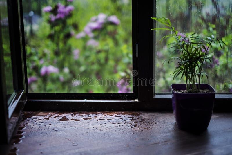 Regndroppar på fönsterfönsterbrädan i vår Se regnet till och med fönstret hemifrån royaltyfri foto