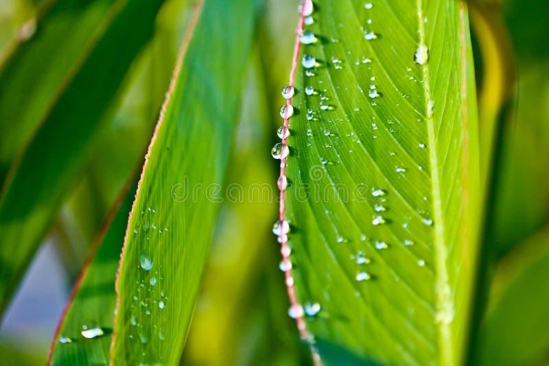 Regndroppar på sidor efter regn royaltyfria foton