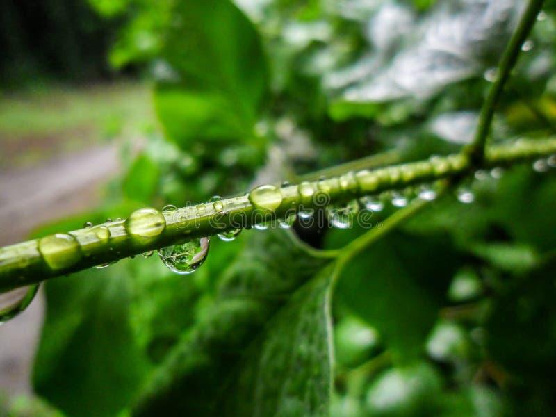 Regndroppar på stammen i regnet royaltyfri foto