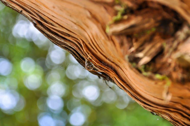 Regndroppe på en trädstam royaltyfri fotografi