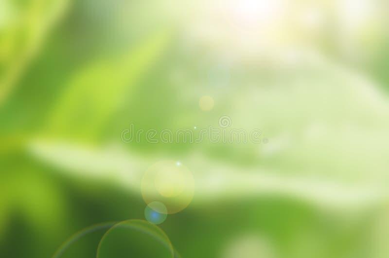 Regndroppe på gröna sidor royaltyfria foton