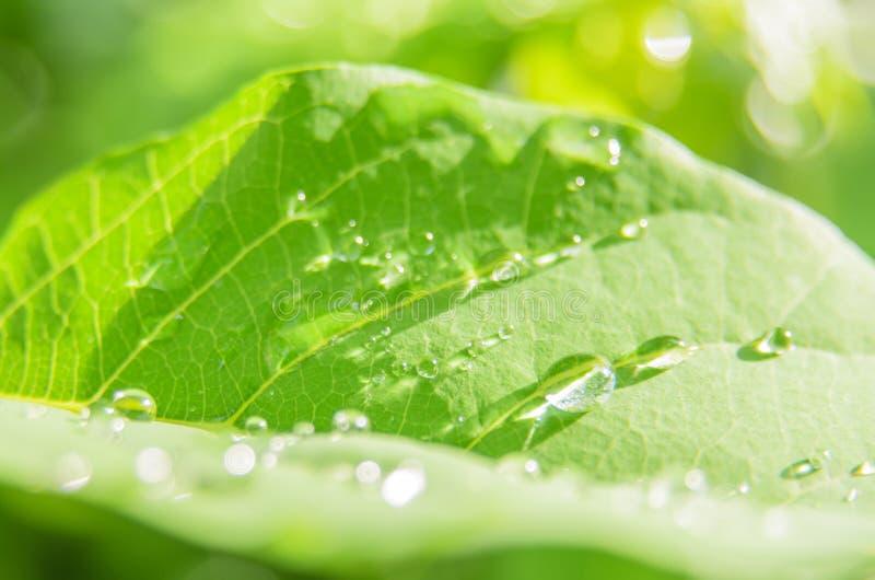 Regndroppe på gröna sidor arkivfoto