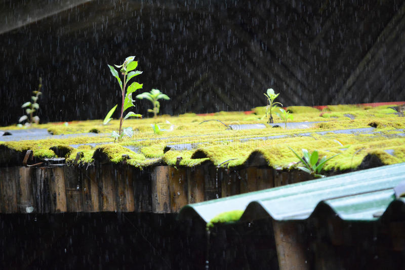 Regnen auf Dach lizenzfreie stockbilder