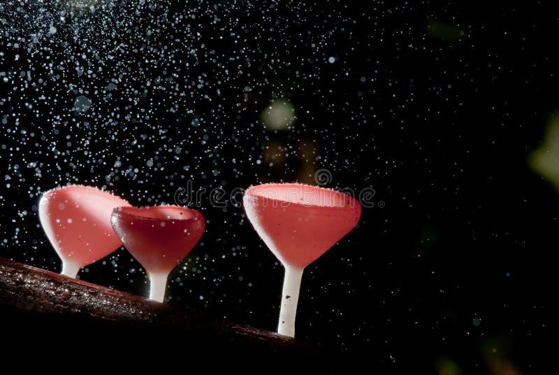Regnen Sie den schönen rosa Champagnerpilz, der auf Bauholz gezeichnet wird lizenzfreie stockfotos