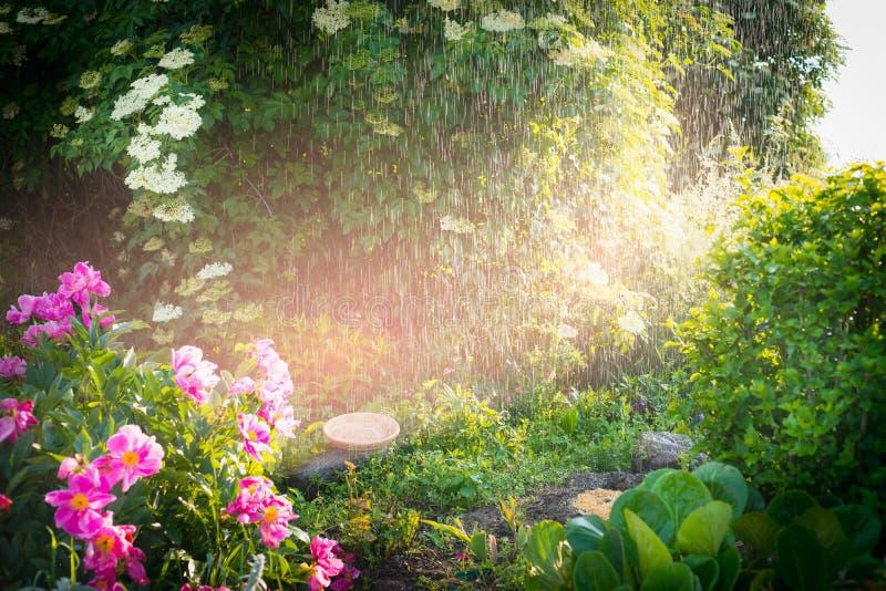 Regnen Sie im reizenden Sommergarten mit den Blumen und Sonnenlicht, im Freien stockbild