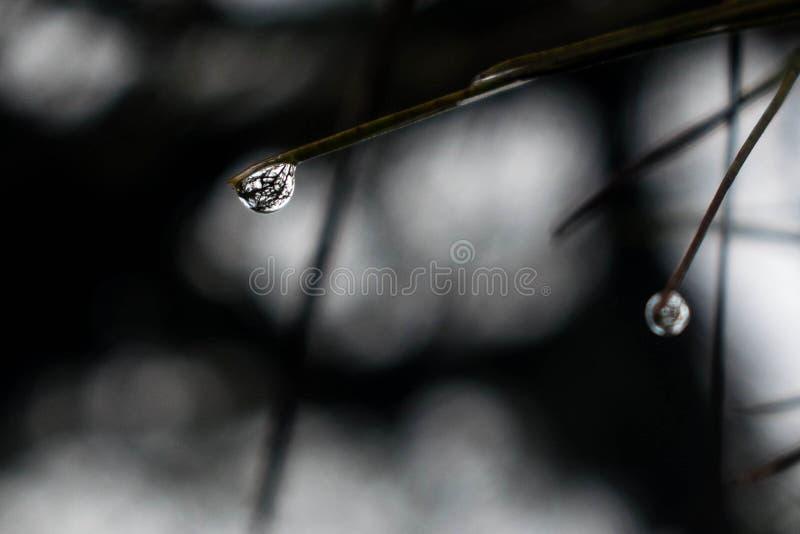 Regnen Sie Tau, Morgentau, das Gras, das über einen Regentau nachgedacht wird lizenzfreie stockbilder