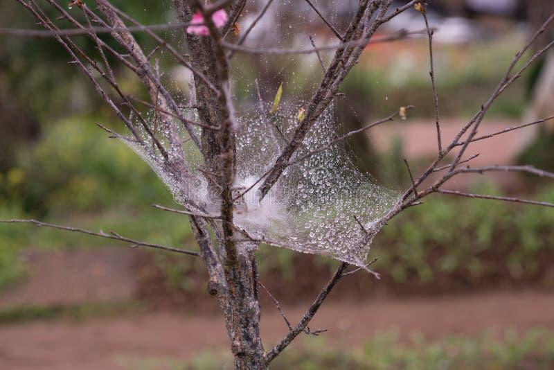 regnen Sie Tropfen oder Tau auf Spinnenpfeilernetz stockbilder
