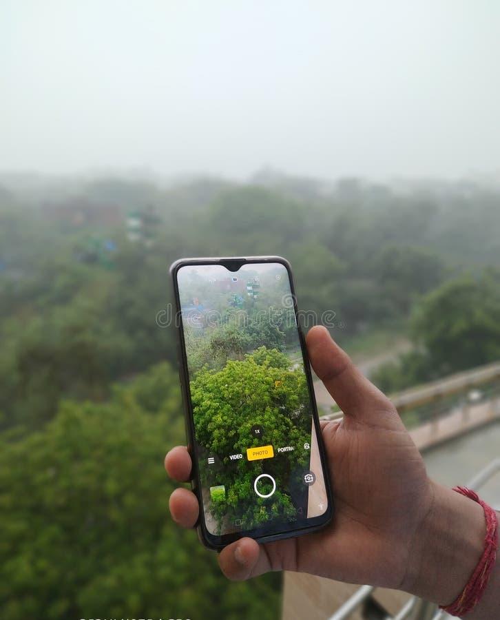 Regnen von Seson auf Naturwald lizenzfreies stockbild