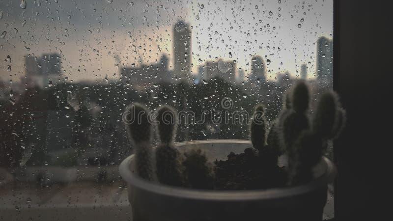 Regnender Baum stockfoto