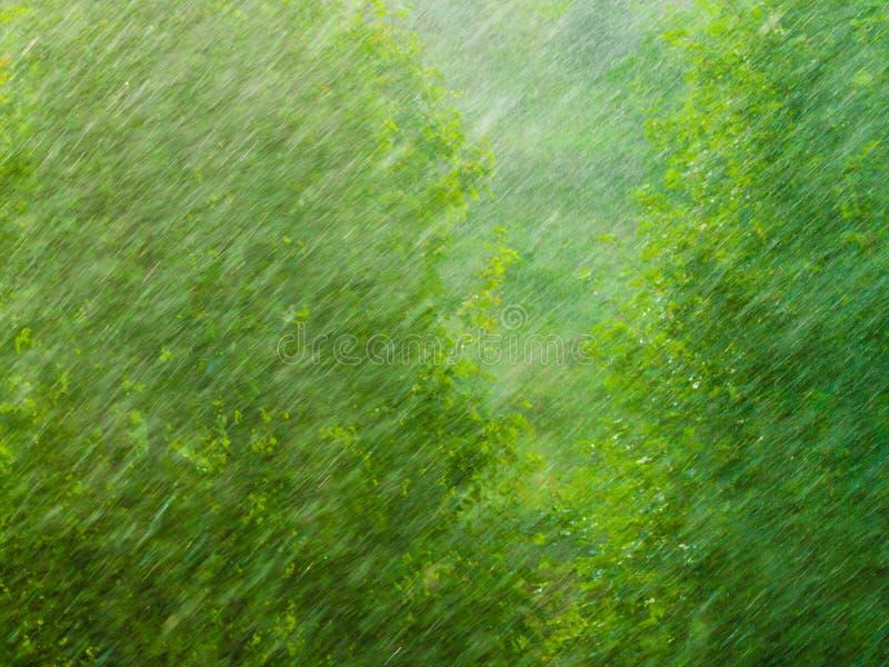 Regnerische äußere Fenstergrün-Hintergrundbeschaffenheit stockfotos