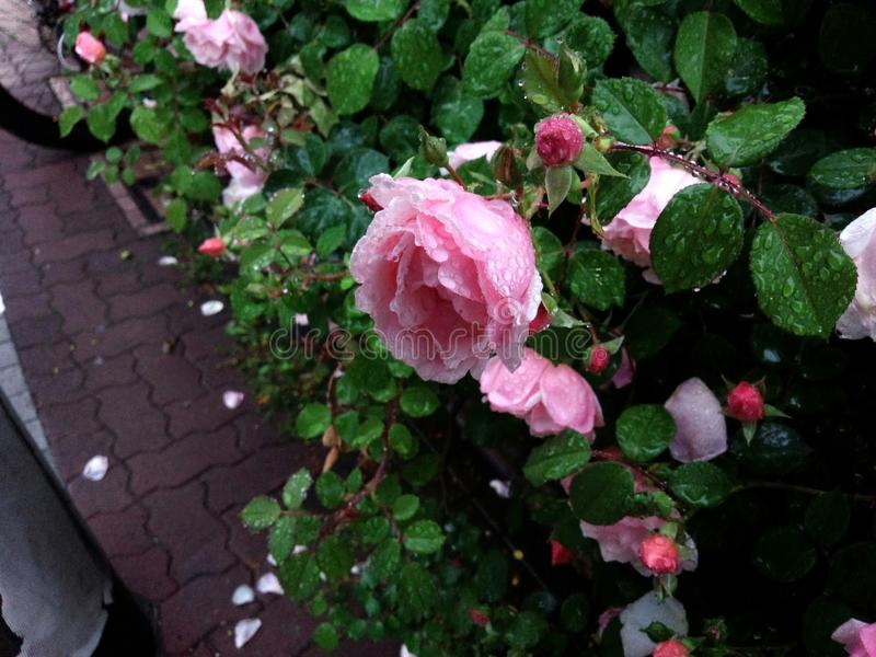 Regnerische Blume lizenzfreie stockfotos