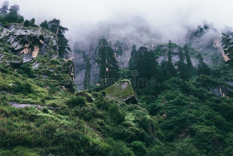 Regnerischer nebeliger Himalajawald nahe Manali, Indien lizenzfreie stockfotos
