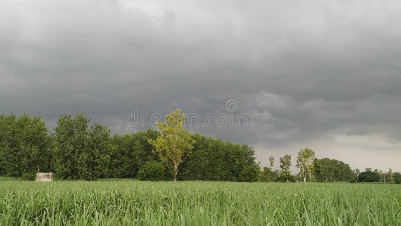 Regnerischer Tag auf dem landwirtschaftlichen Zuckerrohrgebiet stockbilder