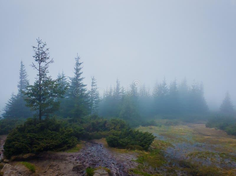 Regnerischer Tag in den Bergen Düstere Landschaft mit schlammiger Wiese und Nebel über Tannenwald lizenzfreies stockbild