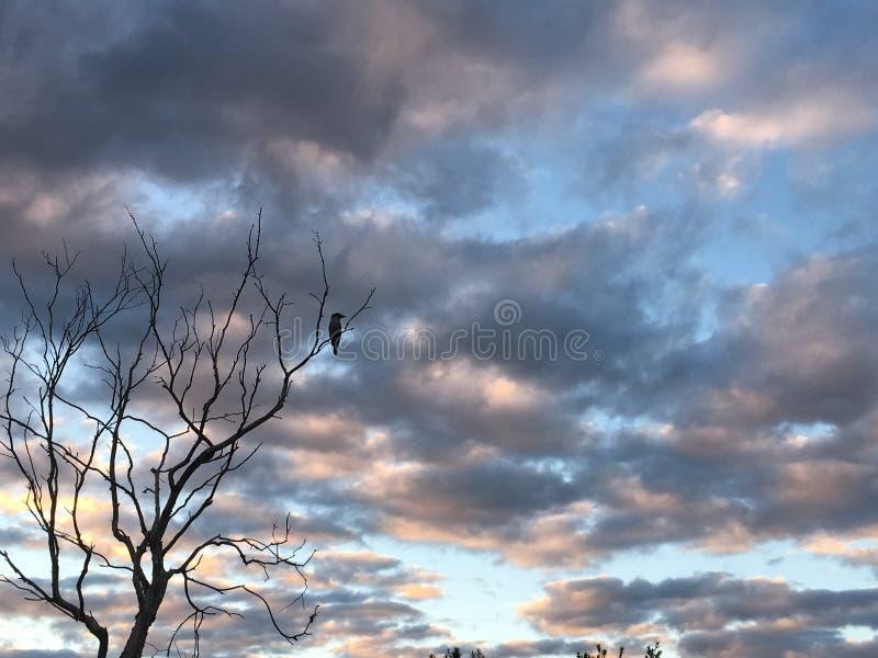 Regnerischer Tagesvögel stockbilder