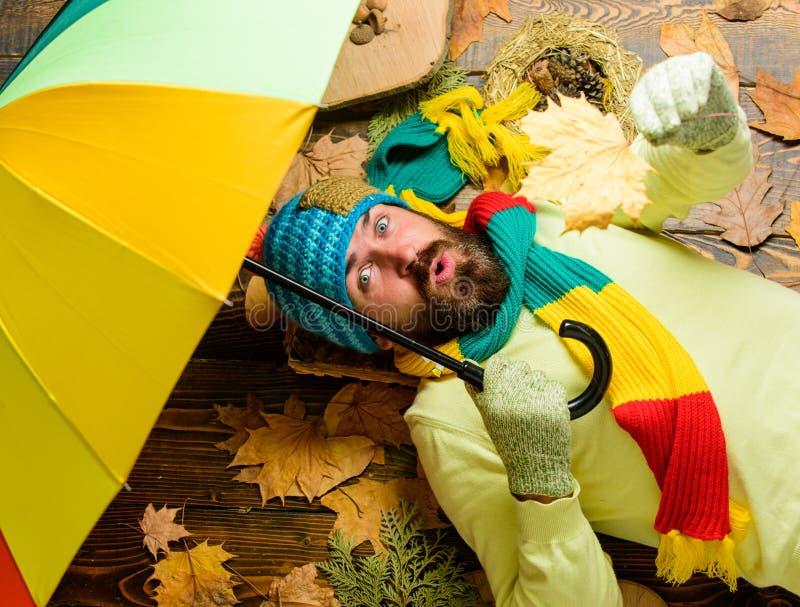 Regnerisches Wettervorhersagekonzept Bemannen Sie bärtige Lage auf hölzernem Hintergrund mit Draufsicht der Blätter Herbstsaisona stockbilder