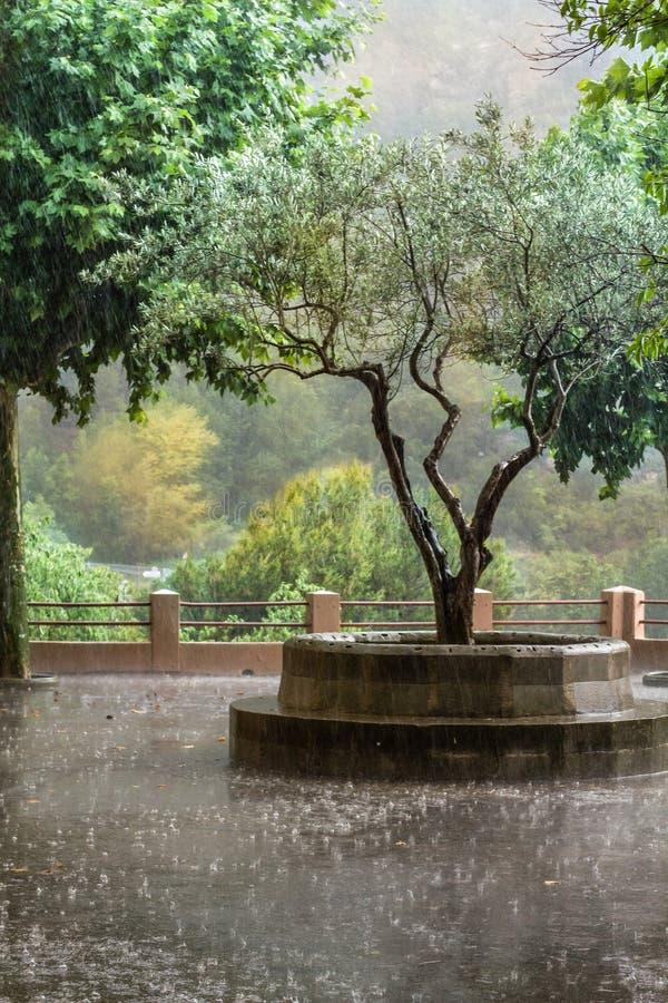 Regnet fotografering för bildbyråer