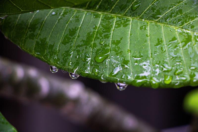 Regnet på sidorna efter regn i Thailand royaltyfri foto