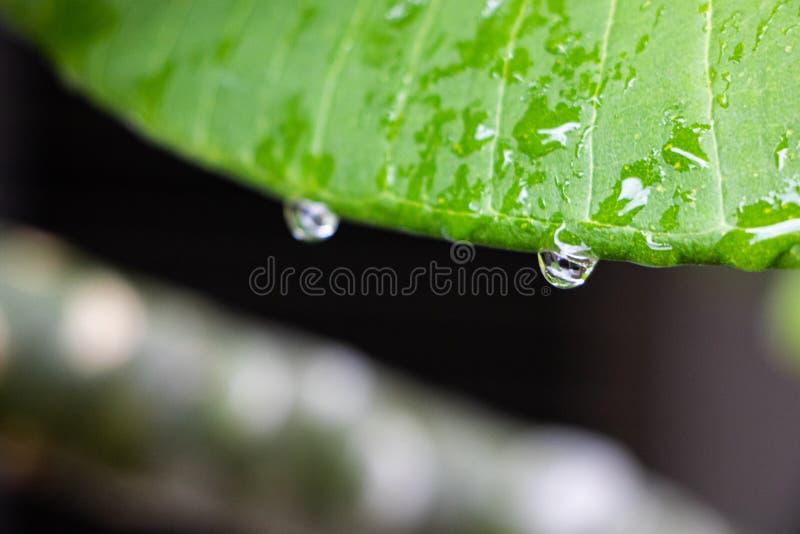 Regnet p? sidorna efter regn i Thailand royaltyfri bild