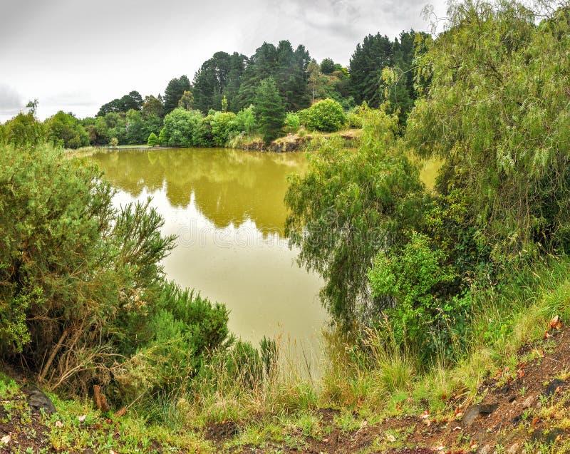 Regnig dag i parkera Wilson australasian royaltyfri foto