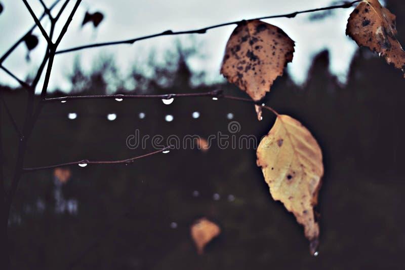 Regnig dag i skogen fotografering för bildbyråer