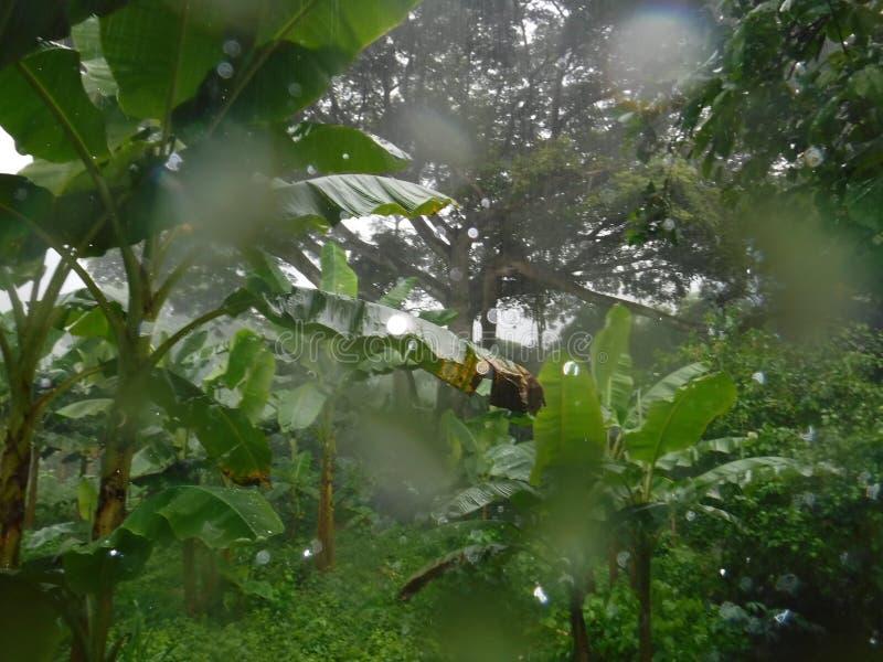 Regnig djungel arkivbild