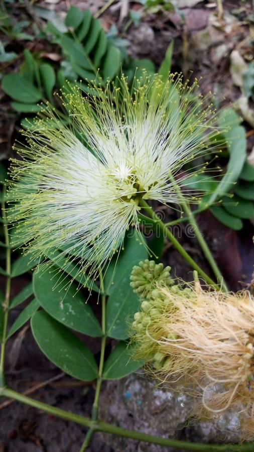 Regnig Seasion blomma royaltyfria foton