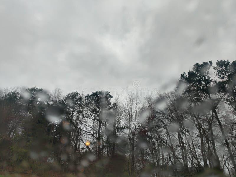 Regniga träd royaltyfri foto