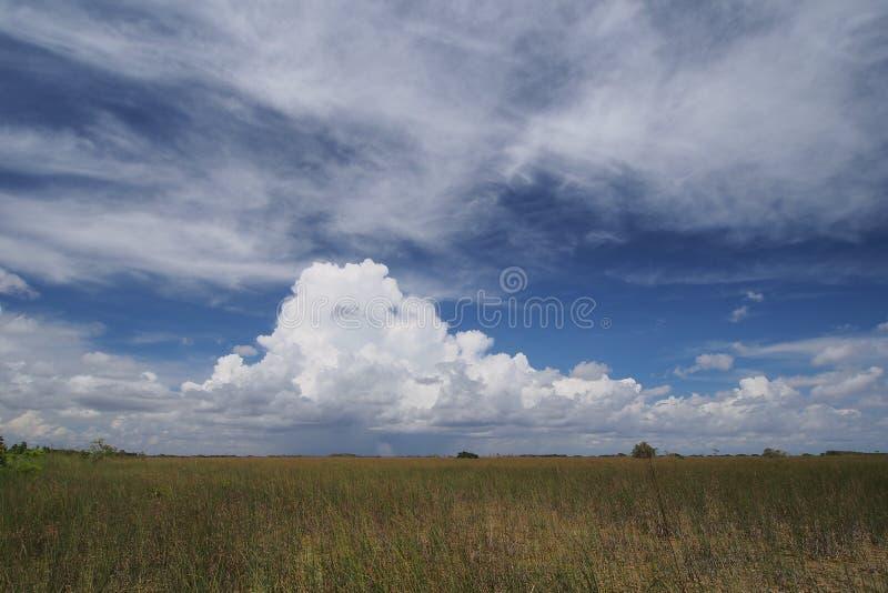 Regnmoln över evergladesna royaltyfria foton
