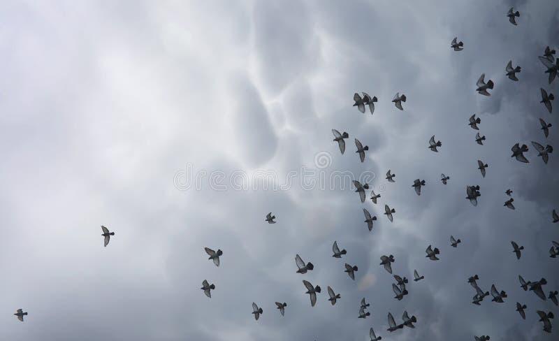 Regnmoln i himlen och en flock av duvor Klosterbrodern lurar royaltyfria bilder