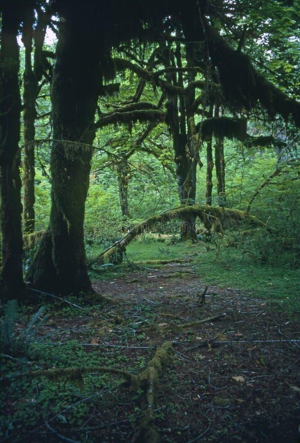 Regnskog royaltyfria bilder
