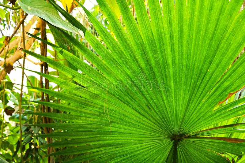 Regnskog royaltyfri fotografi