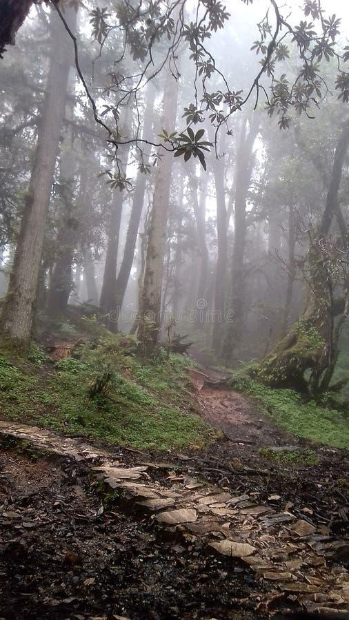 Regnskog av Gairoli Paatal royaltyfri foto