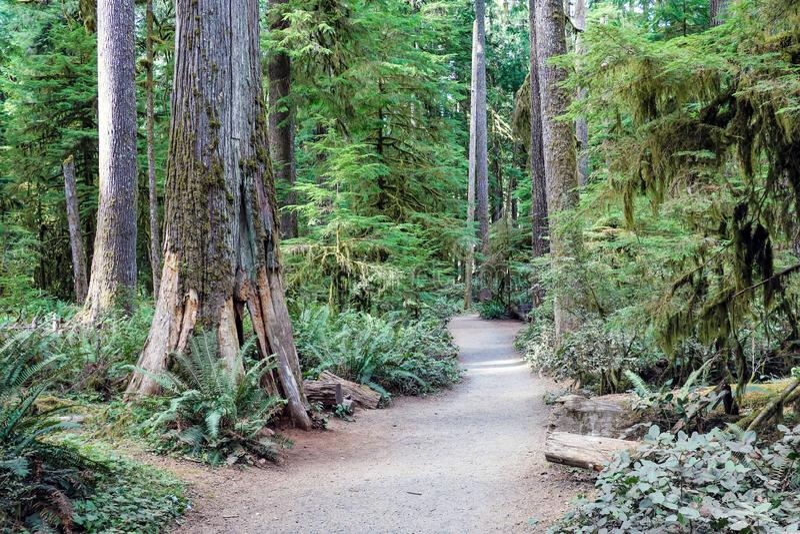 Regnskog i den olympic nationalparken, Washington, USA royaltyfri foto