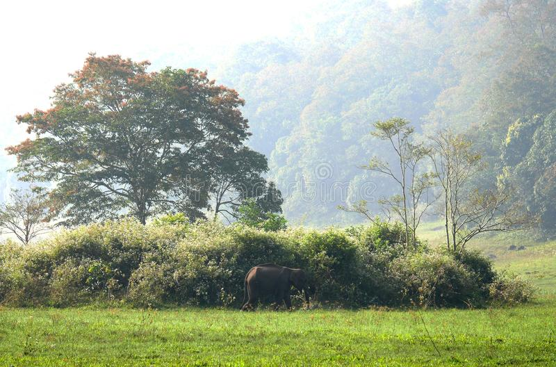 Regnskog i södra Indien royaltyfri bild