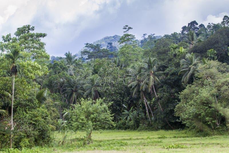 Regnskog i Sinharaja Forest Reserve, Sri Lanka royaltyfri fotografi
