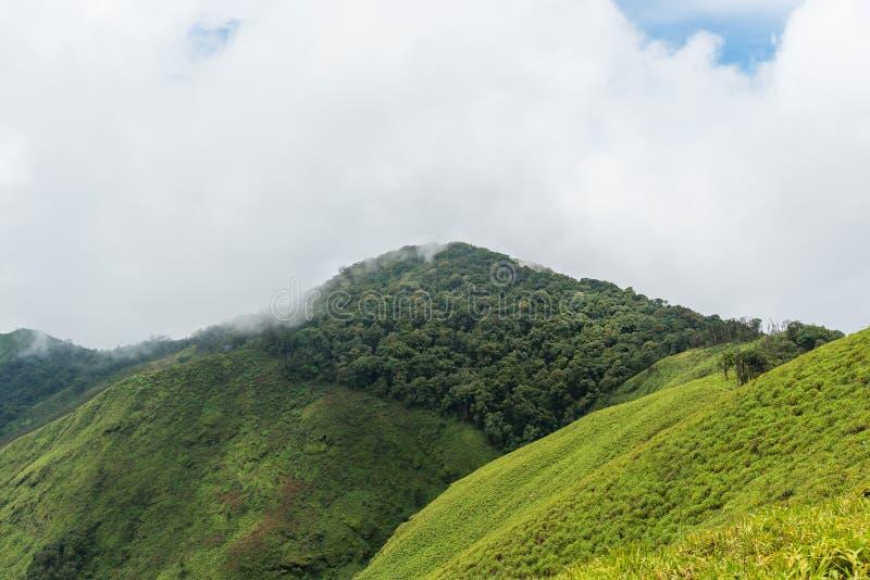 Regnskog på bergkant i en nationalpark på morgon royaltyfri bild